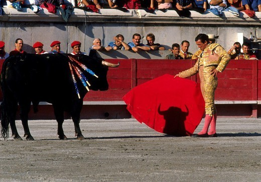 BULL FIGHT. BULL FIGHT The corrida in Nîmes, France. : Stock Photo