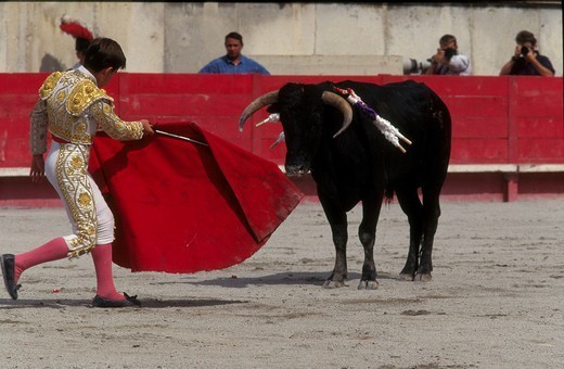 Stock Photo: 824-72936 BULL FIGHT. BULL FIGHT The corrida in Nîmes, France.