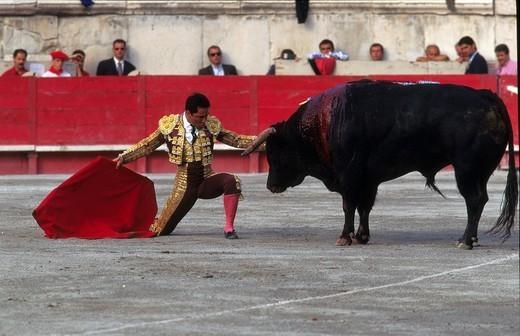 Stock Photo: 824-72937 BULL FIGHT. BULL FIGHT The corrida in Nîmes, France.