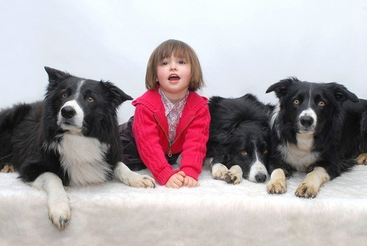 CHILD WITH ANIMAL. 3_year_old girl with her three dogs, adults males black and white Border Collie. : Stock Photo