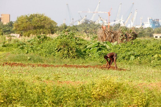 AN AFRICAN SCENE. African farmer. : Stock Photo