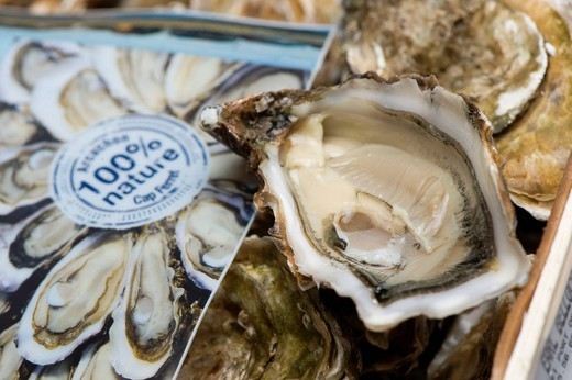 Stock Photo: 824-82224 OYSTER