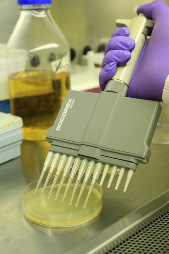 Stock Photo: 824-85826 BIOLOGY LABORATORY. BIOLOGY LABORATORY Photo essay from laboratory. Laboratory of cellular microbiology at the University medical centre of Geneva (Switzerland). Here, genetic manipulation of pathogenic bacteria.