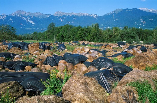 EUROPEAN AGRICULTURE. EUROPEAN AGRICULTURE Straw containing dioxins in Gilly_sur_Isere 73, France. This area is contaminated by dioxins generated by an incinerator. : Stock Photo