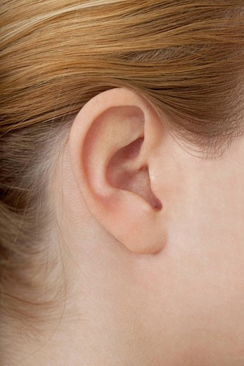 EAR Model. : Stock Photo
