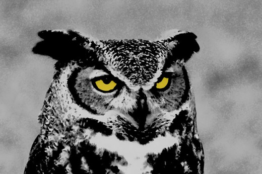Stock Photo: 837-2669 Close-up of a Great Horned Owl (Bubo virginianus)