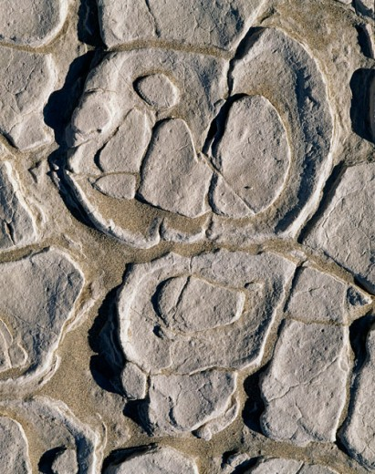 Close-up of a pattern on a stone, Death Valley National Park, California, USA : Stock Photo