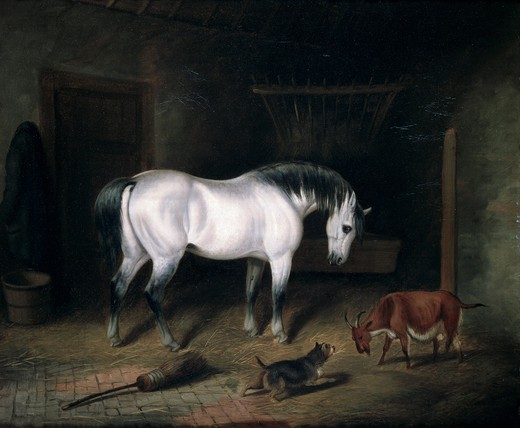 Horse,  goat and dog in barn : Stock Photo
