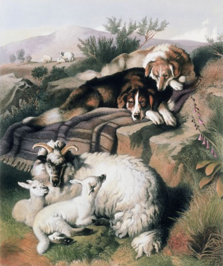 Stock Photo: 862-1374 The Twins (After Engraving By George Zobel) 1872 Edwin Henry Landseer (1802-1873 British)
