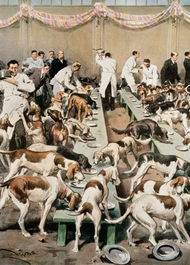 Stock Photo: 862-1572 Feeding Of Dogs At Exhibition