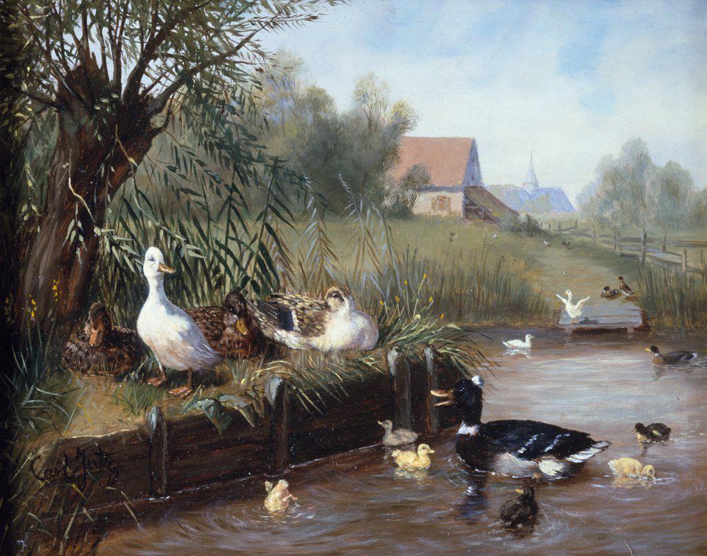 Stock Photo: 866-3748 Ducks on river, Carl Jutz I, oil on canvas, (1838-1916), England, London, Christie's Images