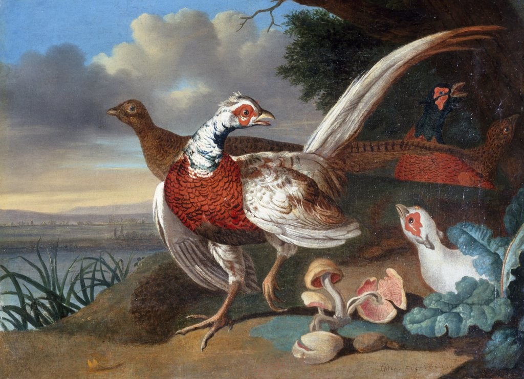 Stock Photo: 866-3798 Pheasants on river bank, by Philip Ferdinand de Hamilton, oil on burlap, (1664-1750), England, London, Christie's Images
