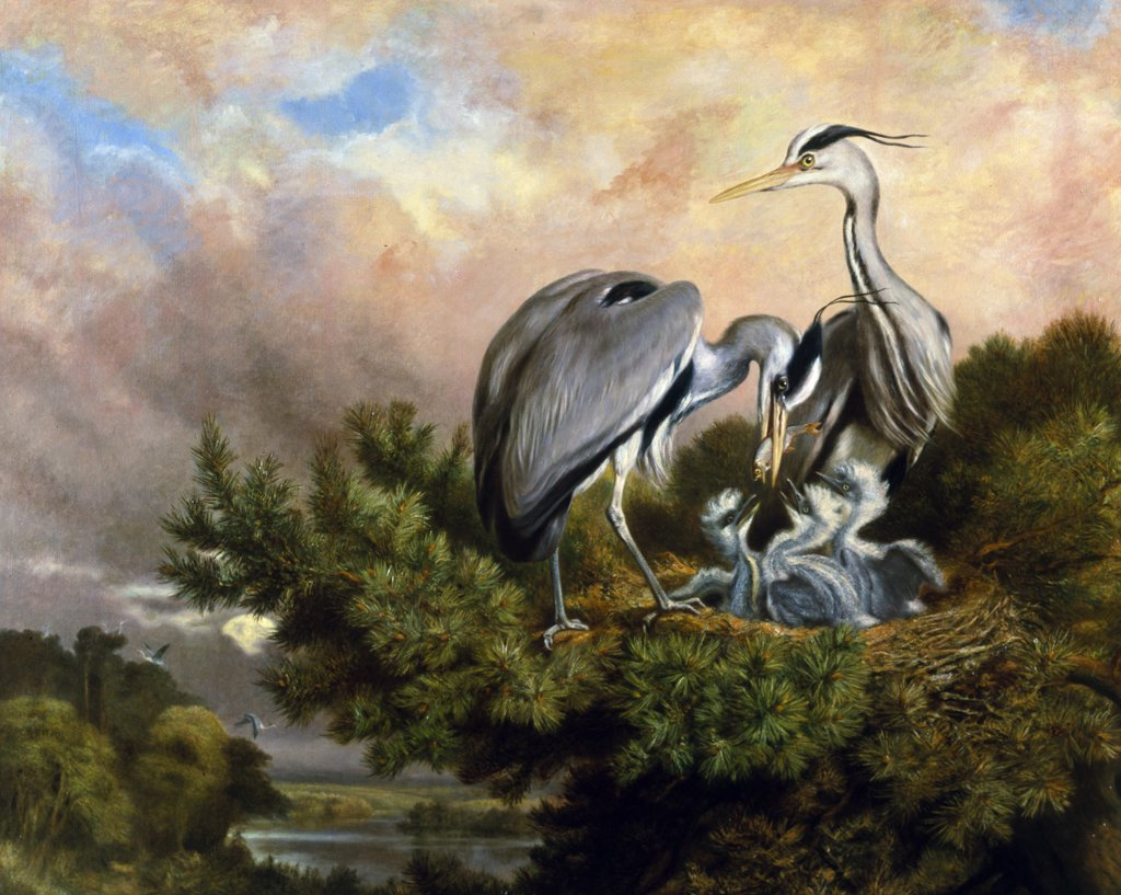 Stock Photo: 866-4149 Heron pair feeding young in nest in Pine Tree, by Samuel John Carter, (1835-1892), England, London, Christie's Images