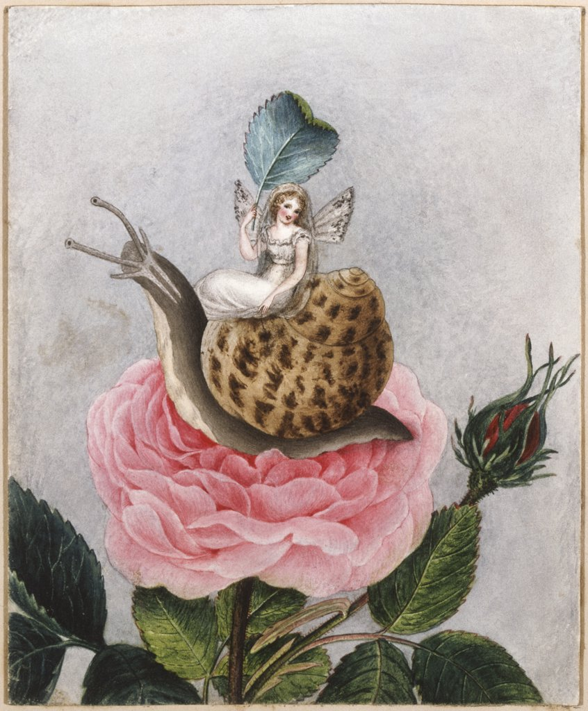 Stock Photo: 866-4609 A Fairy Holding a Leaf, Sitting on a Snail Above a Rose