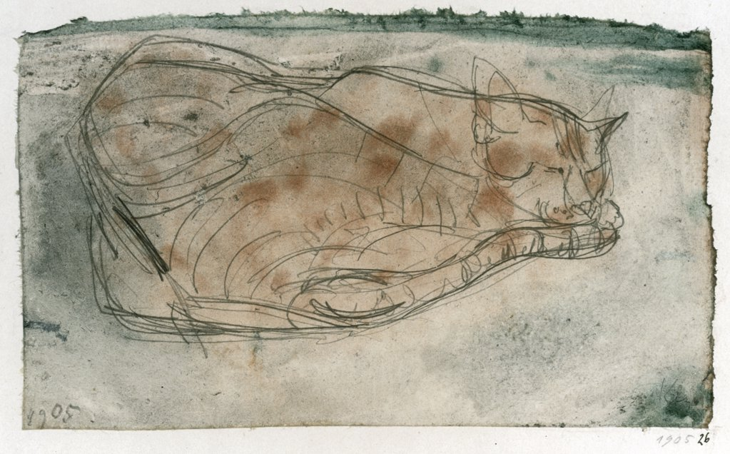 Stock Photo: 866-5032 Sleeping Cat