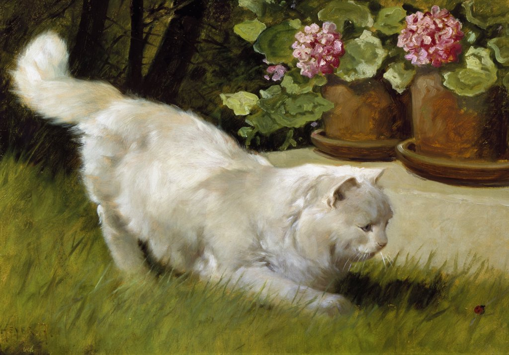 Stock Photo: 866-5115 A White Persian Cat With A Ladybird 