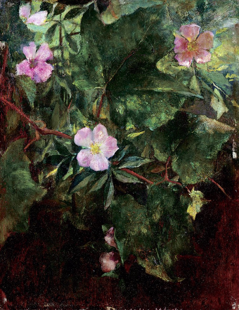 Stock Photo: 866-5411 Wild Rose and Grape Vine, Study from Nature 1871 John La Farge (1835-1910 American) Oil on panel