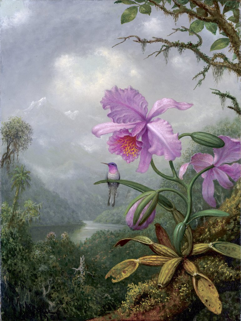 Hummingbird Perched on an Orchid Plant 1901 Martin Johnson Heade (1819-1904 American) Oil on canvas : Stock Photo