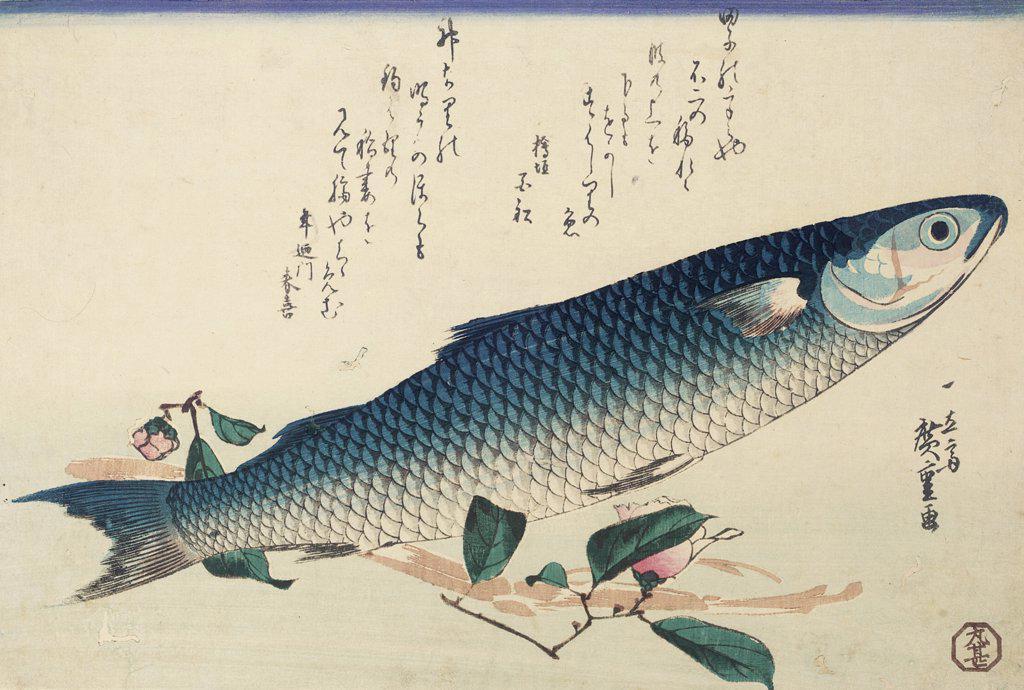 Design from a Large Fish Series, Signed Ichiryusai Hiroshige GA,Oban Yoko - E Utagawa Hiroshige (1797-1858 Japanese) : Stock Photo