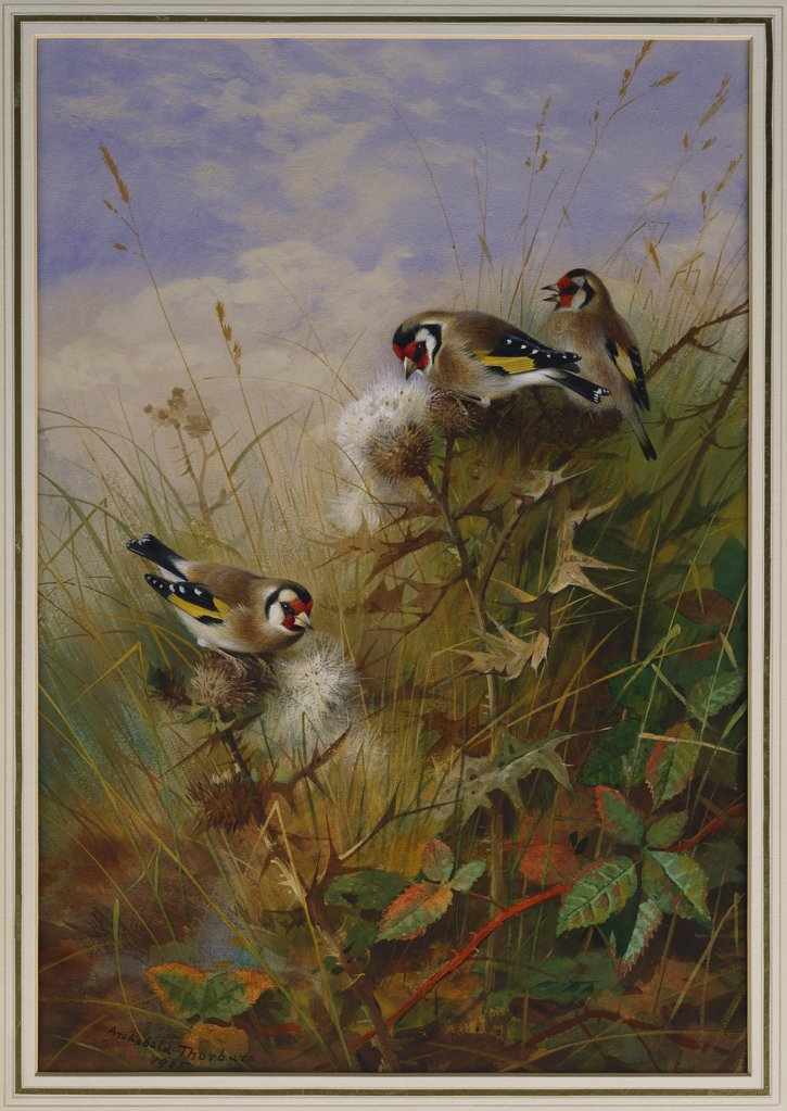 Stock Photo: 866-7676 Goldfinches On Thistles. Archibald Thorburn (1860-1935). Pencil And Watercolour Heightened With White, 22 X 15 5/8in.