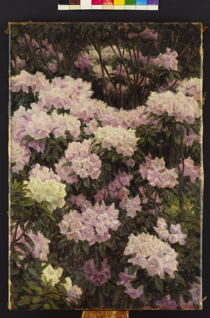 Rhododendrons. Alfrida Baadsgaard (1839-1912). Oil on canvas, 1890. 57.8 x 39.9cm. : Stock Photo