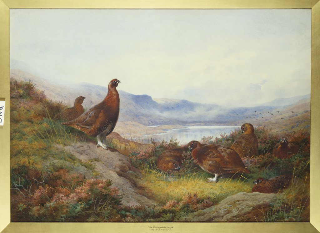 Stock Photo: 866-8099 Morning of the Twelfth.  Archibald Thorburn (1860 -1935). Dated 1910, watercolour with touches of white heightening, 546 x 763mm.