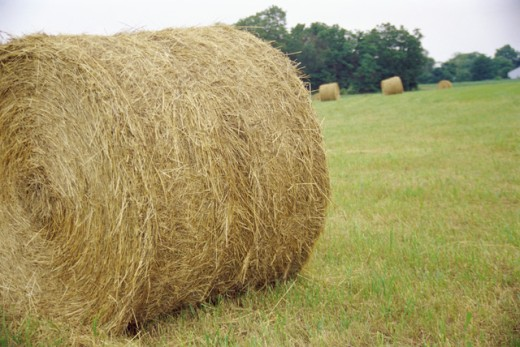 Hay bale in a field : Stock Photo
