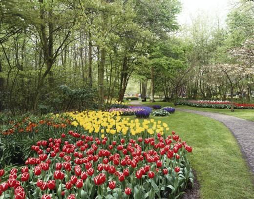 Stock Photo: 869-543C Keukenhof Gardens Lisse Netherlands