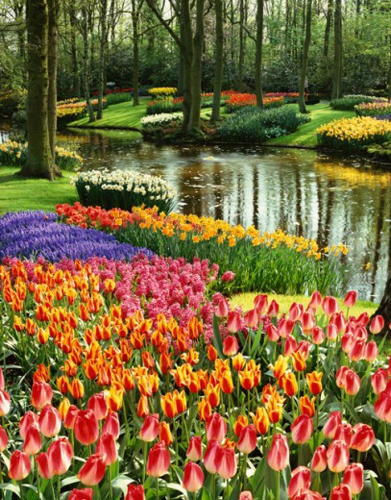 Stock Photo: 869-545B Keukenhof Gardens Lisse Netherlands