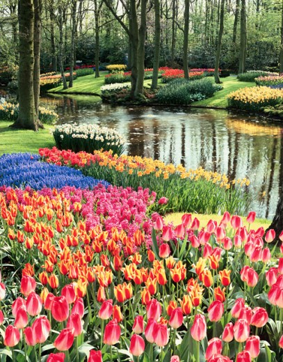 Stock Photo: 869-545C Keukenhof Gardens