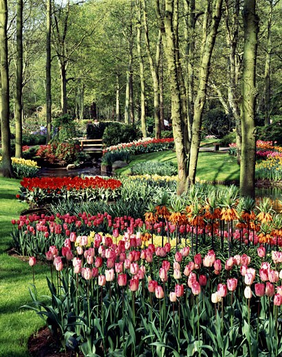 Stock Photo: 869-547C Keukenhof Gardens Lisse Netherlands