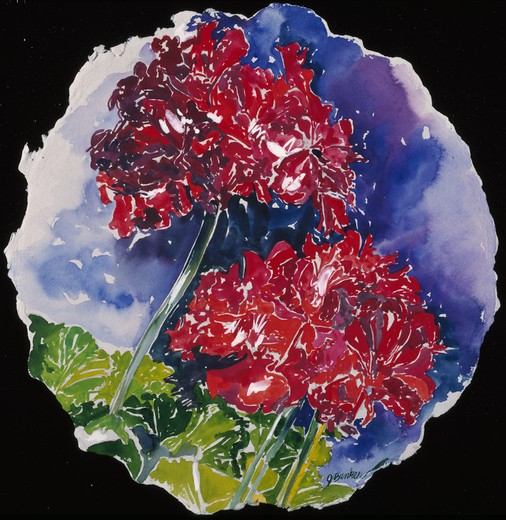 Stock Photo: 875-3014 Geraniums Tondo by John Bunker, watercolor, 1994