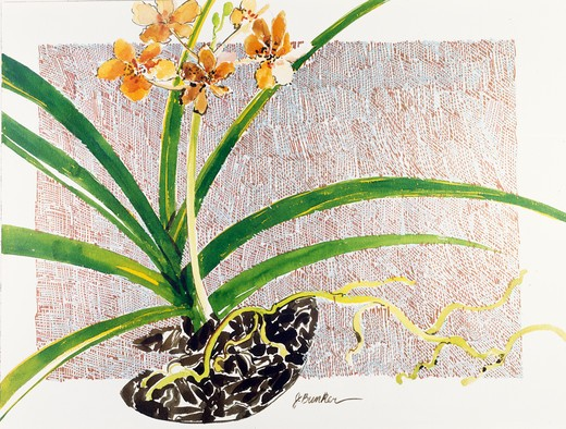 Golden Orchid II