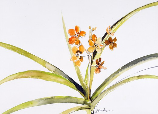 Stock Photo: 875-3097 Golden Orchid I by John Bunker, watercolor, 1990