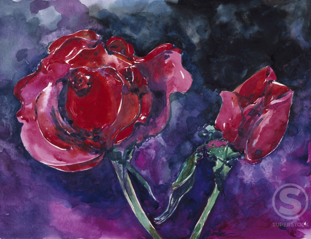Rose Nine, by John Bunker, watercolour painting, 1990, 20th Century : Stock Photo