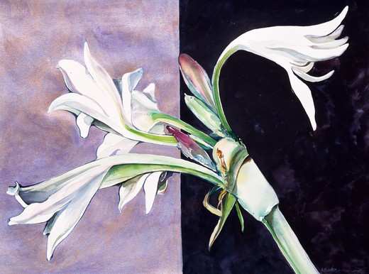 Bipolar Yard Lily, 1995, John Bunker (20th C. American), Acrylic and watercolor, Private Collection : Stock Photo