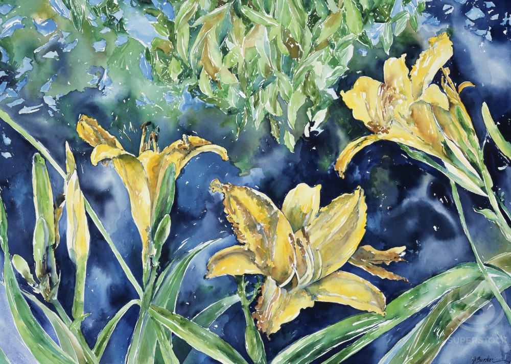 Summer Daylily, 1995, John Bunker (20th C./American), Watercolor on paper : Stock Photo