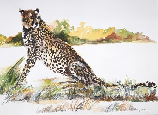 Africa, Kenya, Safari, Cheetah by John Bunker, watercolor, 1996 : Stock Photo