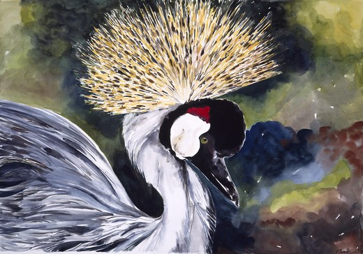 Africa, Kenya, Safari, Crested Crane by John Bunker, watercolor, 1996 : Stock Photo