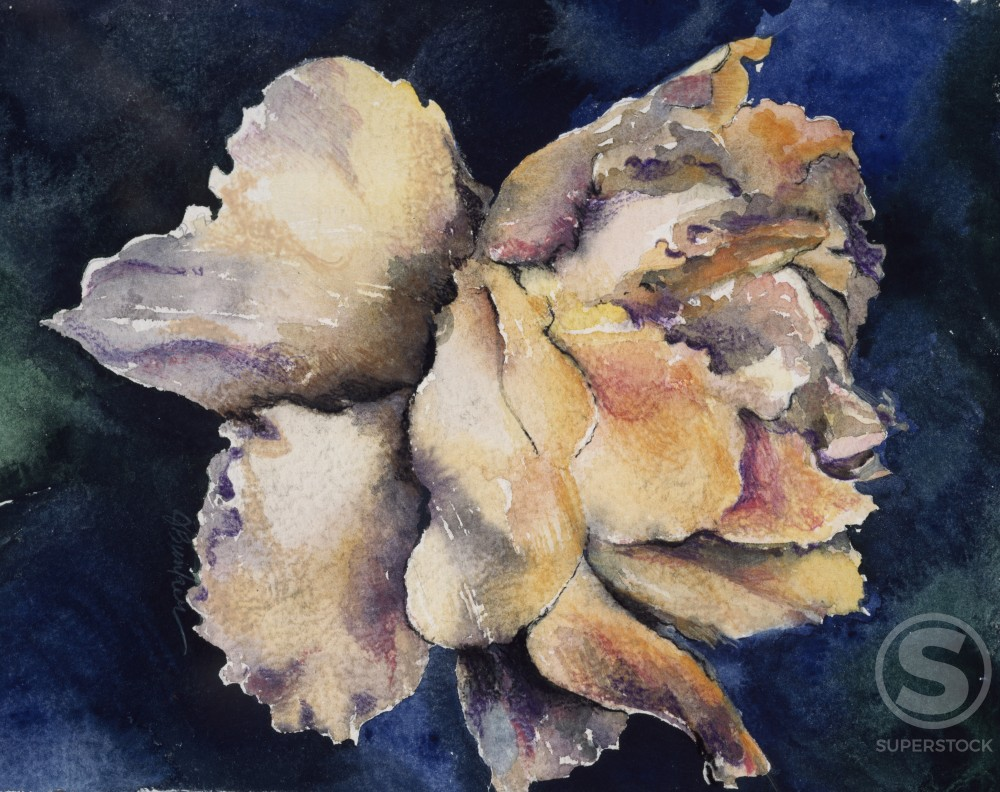 Stock Photo: 875-3283 Antique Rose by John Bunker, watercolor on paper, 1997