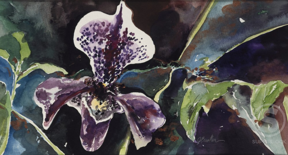 Stock Photo: 875-3303 Paper Orchid, by John Bunker, watercolour and metallics, 1997, 20th Century