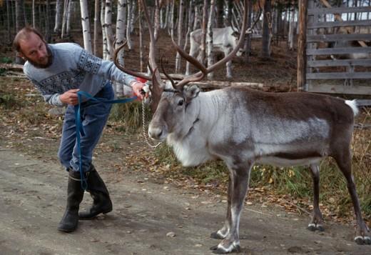 Lapland Finland : Stock Photo