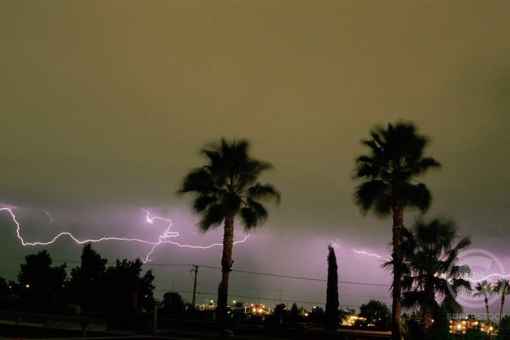 Silhouette of palm trees with lightning in the background : Stock Photo