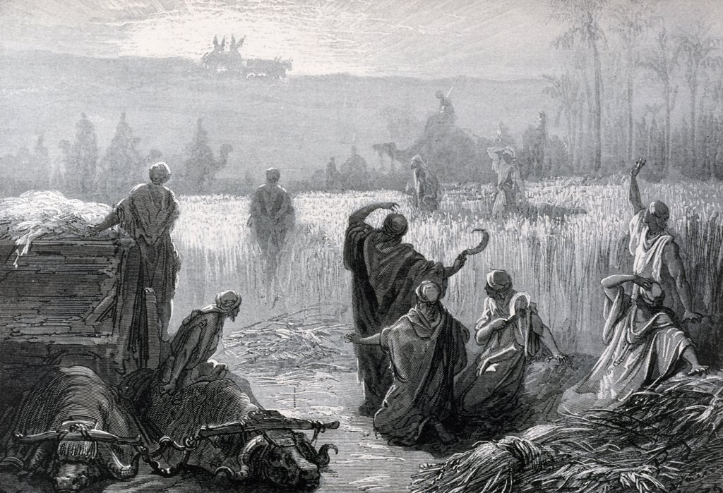 Stock Photo: 900-1188 Ark Returns, The, Dore, Gustave (1832-1883/French)