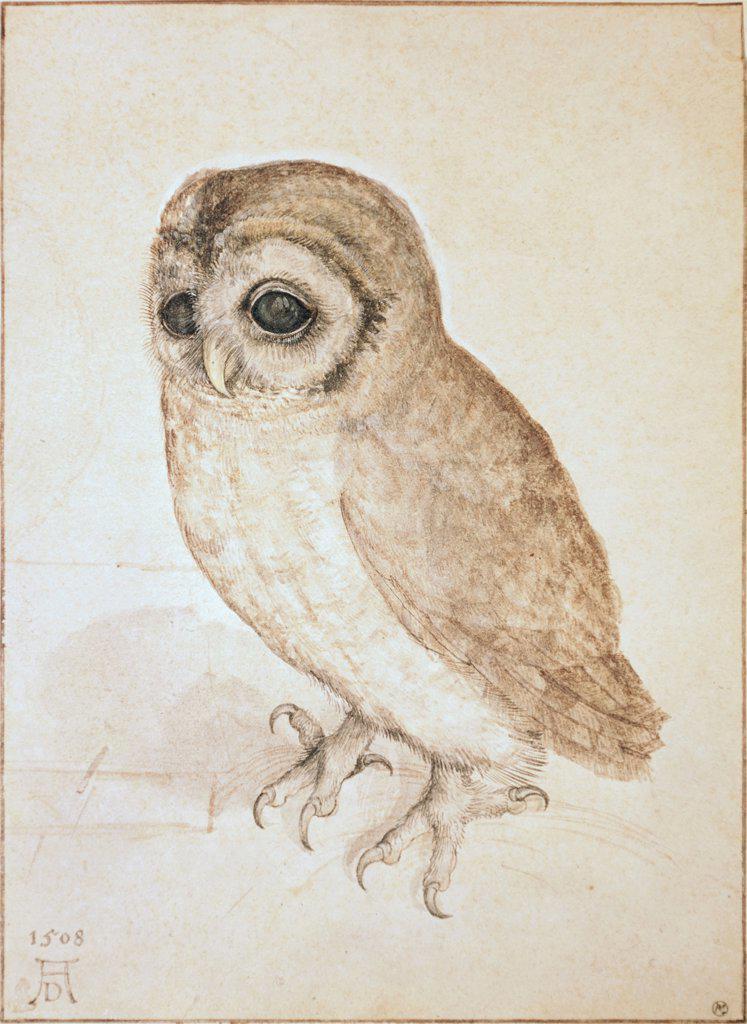 Stock Photo: 900-119473 The Screech Owl Albrecht Durer (1471-1528 German)