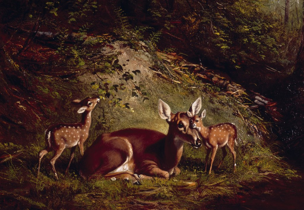 Stock Photo: 900-122891 Doe and Fawn by Arthur Fitzwilliam Tait, (1819-1905)