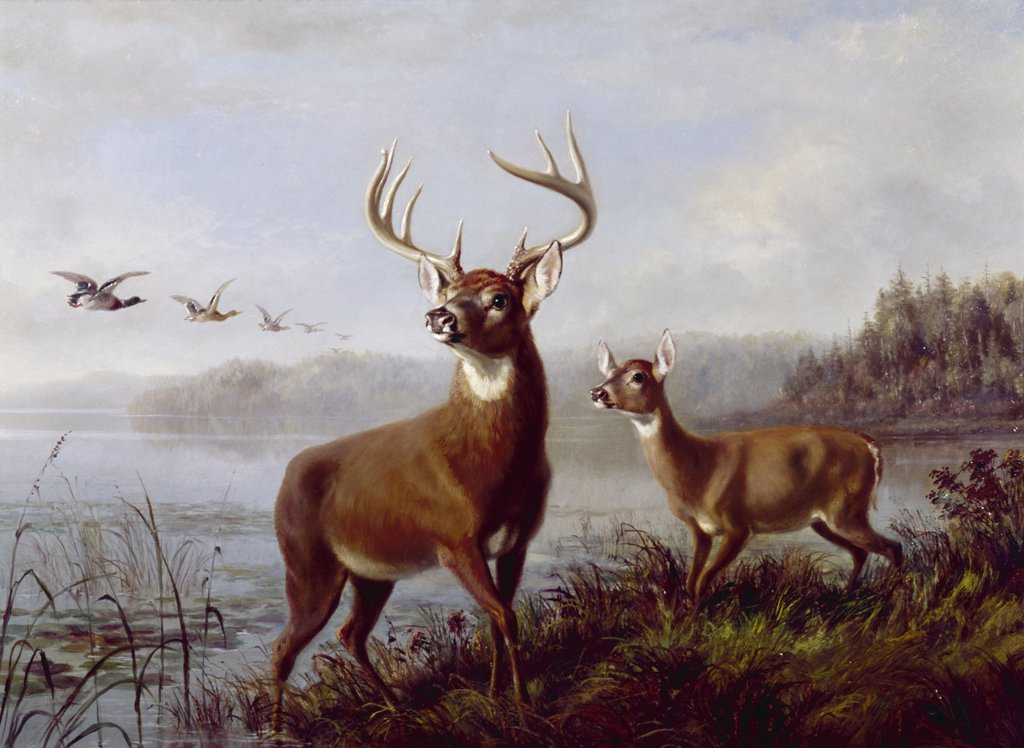 Stock Photo: 900-128646 Buck and Doe Alerted by Arthur Fitzwilliam Tait, (1819-1905)