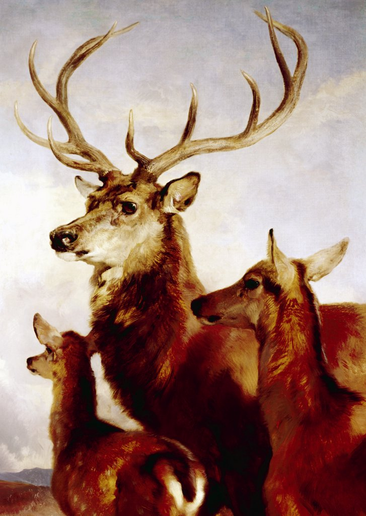 Deer, male, female and young, portrait, painted image : Stock Photo