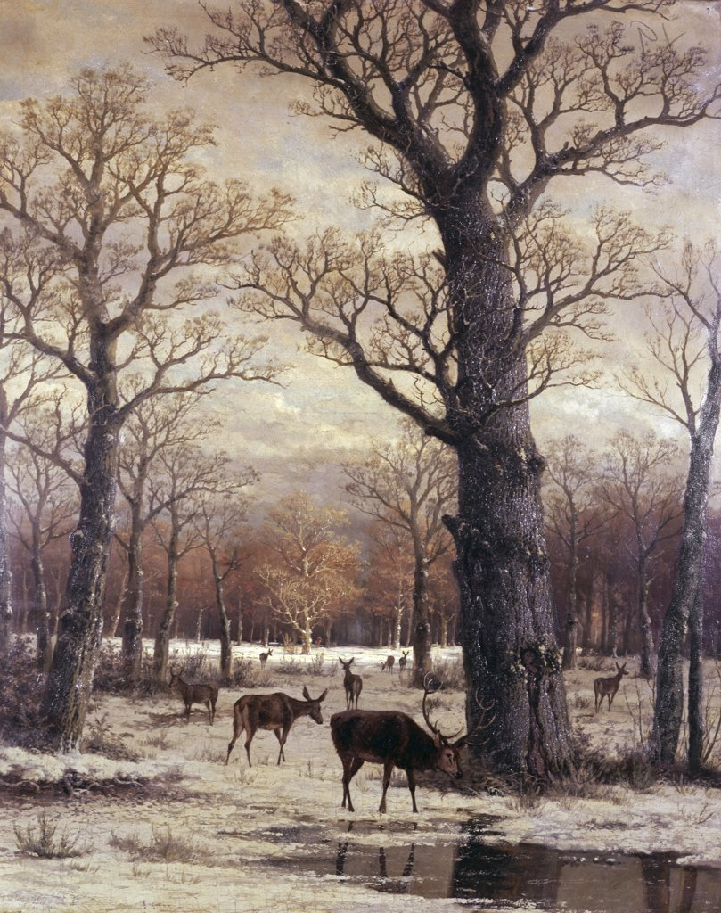 Stock Photo: 900-132351 Deer Foraging, Winter
