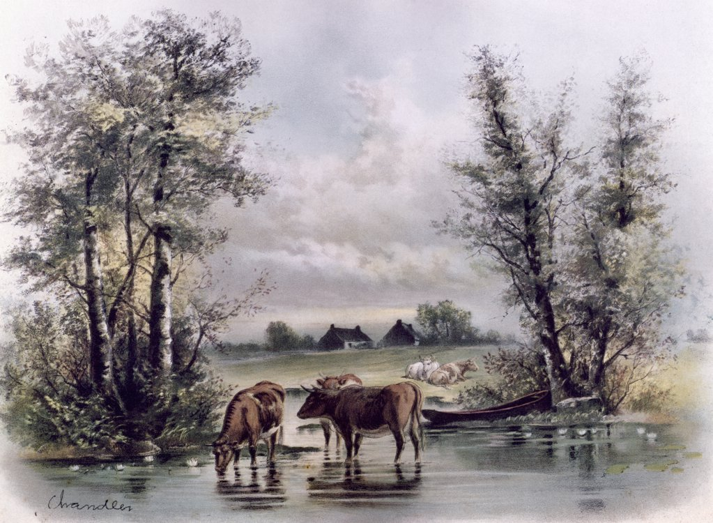 Stock Photo: 900-133055 Cows in Stream, artist unknown,, 19th-20th Century